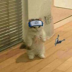 Anime Kitten, Gato Anime, Cat Stands, Itachi Uchiha, Akatsuki, Anime Naruto, Cat Memes, Therapy, Icons