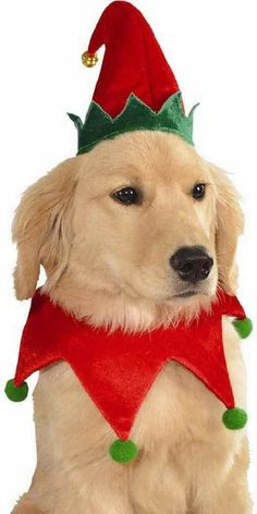 $9.99 - Elf Set Hat Collar Santa's Helper Cute Christmas Pet Dog Cat Costume Accessory #ebay #Home & Garden