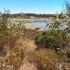 Ria Formosa, Algarve, Portugal