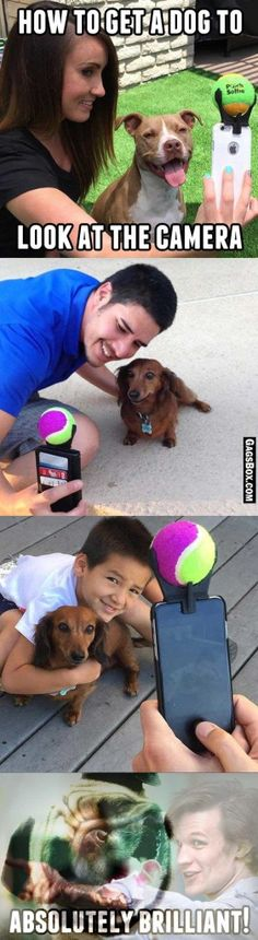 Selfie with dogs - problem solved