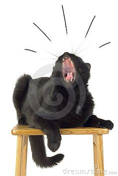 Jaws - Black Cat. /Stock Photo/