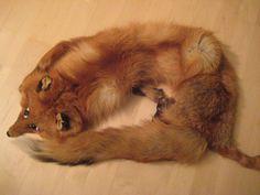 turkispuuhka 1990 luvulla näitä valmistui useita 1990, Fox, Animals, Animales, Animaux, Animais, Foxes, Animal
