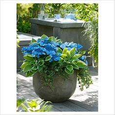 Hosta, ivy, and hydrangea for shade. From http://www.pinterest.com/cynthialudlow/gardens-and-outdoors-design/