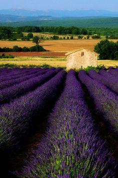 Zomer in de Provence, Zuid-Frankrijk. www.luxetent.nl/frankrijk