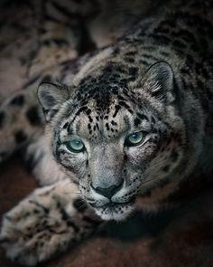 Uncanny eyes  Photography by © Patrik Stanek #Wildgeography
