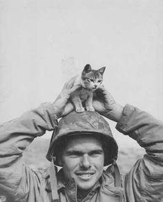 Marine with a kitten on Iwo Jima, WWII