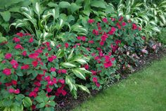 Fill gaps from spring perennials with annuals like impatience and begonias