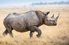 $23 Million for Rhinos: Howard Buffett's Mega Gift to Help Stop Poaching | TakePart
