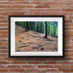 """Pine Needle Forest 