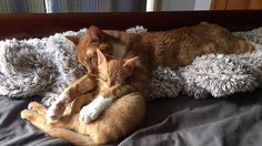 I was worried that my cat wouldn't be very fond of the new kitten but they're inseparable.