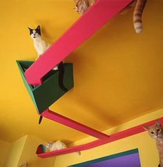 Bob Walker and Fraces Mooney's San Diego cat house boasted an elevated feline freeway and floor-to-ceiling scratching posts. but they are now living in a motorhome with their eight cats. Crazy Cat Lady, Crazy Cats, Cat Walkway, Cat Stands, Cat Playground, Cat Room, Cat Condo, Cat Friendly Home, Cat Furniture