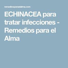 ECHINACEA para tratar infecciones - Remedios para el Alma