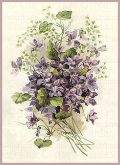 Bouquet Of Violets By Catherine Klein
