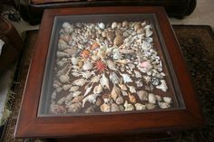 https://flic.kr/p/9B1ZAe | Shells under glass coffee table | After many years of…