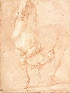 Pierre Puget - Study of a Horse  www.thewarmbloodhorse.com