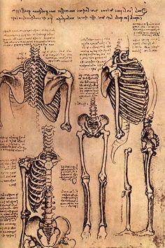 Vitruvian Man , Human Proportions, Leonardo Da Vinci Sketchbook - How to Draw Human Figure Resources. I like How Da Vinci draws this skeleton with a lot of detail and accuracy.
