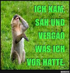 Ich kam, sah und vergaß was ich vor hat. Funny Sports Pictures, Funny Photos, Cool Pictures, Beautiful Pictures, Facebook Humor, Funny Animal Videos, Funny Animals, Image Facebook, Good Humor