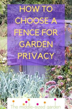 Fences for privacy - ideas for privacy fences, backyard privacy fences, fences for small garden privacy plus how to use trellis for screening in your garden Privacy Trellis, Garden Privacy Screen, Privacy Fences, Garden Fencing, Privacy Landscaping, Backyard Privacy, Low Maintenance Garden Design, Low Fence, Garden Screening