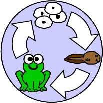 Learning about the Frogs Life Cycle:) Kids LOVE frogs and they don't know they are learning.