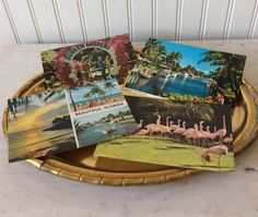 Vintage Florida Postcards, Set of 4, Flamingos, Palm Trees, Parrots, San Diego Zoo, Sunken Gardens, Coastal, Scrapbook, Memorabilia