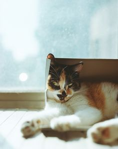 please can I be reincarnated as a cat