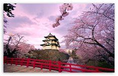 Cherry Blossoms, Japan HD desktop wallpaper : High Definition : Fullscreen : Mobile