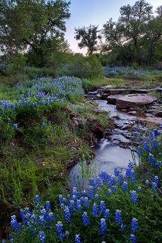 """Bluebonnet Creek"", Mason County, Texas - Bluebonnets line a small creek in the Texas Hill Country. Beautiful World, Beautiful Places, Beautiful Pictures, Mason County, Texas Bluebonnets, Texas Hill Country, Blue Bonnets, Parcs, Belle Photo"