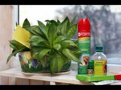 ВРЕДИТЕЛИ КОМНАТНЫХ РАСТЕНИЙ и меры борьбы с ними ❖❖❖ Защита растений от вредителей - YouTube