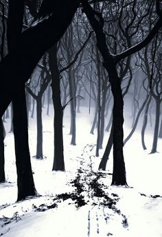 """Totally reminds me of """"Stopping by the Woods on a Snowy Evening"""""""