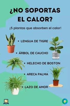 These replanting hacks will make you grow crazy! #jardineríaenmacetas