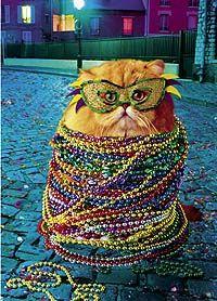 Mardi gras cat.  Meeow.