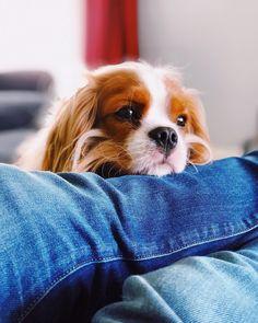 Grover on Instagram: #cutepetshots #cuteanimalshots #petsoftheday #petslovers  #dogloversclub #dogloversonly #dogloversunite #dogloverforever #pupperdoggo #gooddoggo #cutedoggo #puppyfun #puppydaily #puppypic #puppyofinsta #puppydays #puppiesoftheday #puppiesdaily #puppieslover Animals And Pets, Cute Animals, Pupper Doggo, Two Dogs, Cat Day, Dog Days, Best Dogs, Cats Of Instagram, Cat Lovers