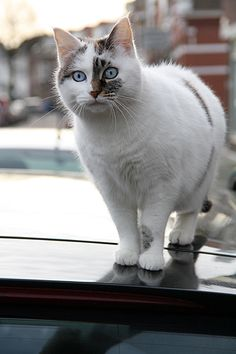 cat on a car