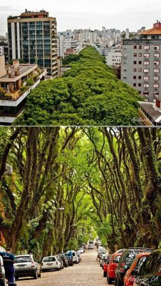 """La gente llama a la Rua Gonçalo de Carvalho la """"calle más hermosa del mundo"""". Es una calle de Porto Alegre, capital del estado brasileño de Rio Grande do Sul. Lo que llamará la atención de la calle no está relacionado con la calle como tal, lo que impresiona es la enorme cantidad de árboles que la cubre."""