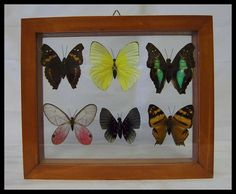Colorful Six Specie Butterfly Frame Wall Hanging Wedding Gift Home Office Décor by timelessdesigns07 on Etsy