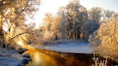 Nature HD Desktop Wallpaper Winter Forest
