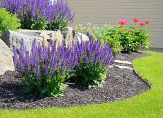 34 easy and low maintenance front yard landscaping ideas 15 blooming Perennials maintenance Perennials full sun ideas Landscaping With Rocks, Landscaping Plants, Front Yard Landscaping, Garden Plants, Landscaping Ideas, Garden Shrubs, Acreage Landscaping, Planting Shrubs, Texas Landscaping