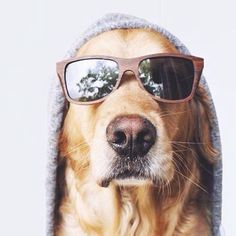 Cool Golden
