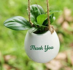 Funny Thank You, Thank U, Thank You Notes, Types Of Succulents Plants, Planting Succulents, Thank You Images, Flower Words, Thank You Greetings, Beautiful Rose Flowers
