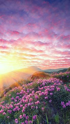Violet Sunrise with wild flowers