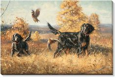 "Gordon Setter Dog | Dare & Dash "" Gordon Setter Dogs 24x36 Canvas Wrap - Artist Robert ..."