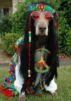 Peace man - Wuff Wuff