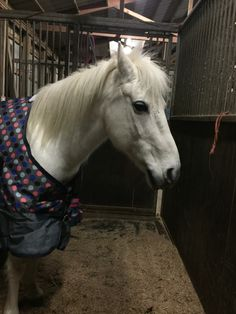 The pony: I do not like this blanket my ears are back for a reason.