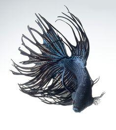 black dragon by visarute angkatavanich on 500px