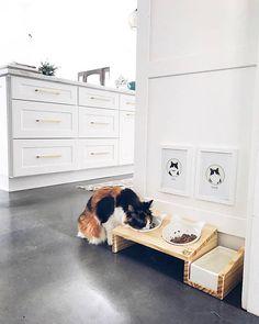 Saviez-vous que les chats sont des mangeurs de crouch naturel et préfèrent manger depuis une position surélevée ? Notre table à manger est conçu pour prévenir le stress whisker et le ventre pour votre félin préféré ainsi que de fournir un look moderne à votre maison. Ce chargeur