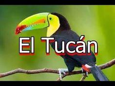 El tucán es nativo de América, está amenazado por  la destrucción de su ... Parrot, Youtube, Exotic Pets, Parrot Bird, Parrots