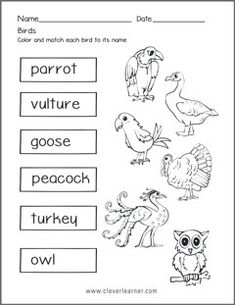 Free Printable Worksheets for Nursery, Kindergarten Senior