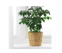 IKEA - FRIDFULL, Plant pot, water hyacinth, A plastic inner pot makes the plant pot waterproof. Potted Plants, Garden Plants, Indoor Plants, House Plants, Hyacinth Plant, Water Hyacinth, Polypropylene Plastic, Planting Flowers, Planting Plants