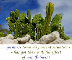 ... #openness towards present situations ~ has got the healthful effect of #mindfulness !