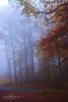 foggy forest / Germany by Robert Juvet on 500px